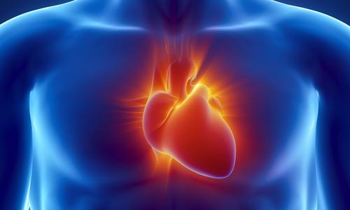 Увеличенное сердце у взрослого
